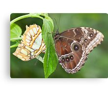 Two Butterflies on A Stem Metal Print