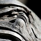 driftwood eye by Kent Tisher