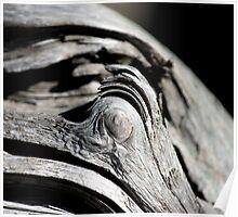 driftwood eye Poster
