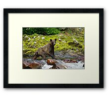 Creek Walker Framed Print