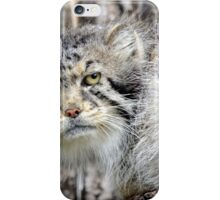 The Original Grumpy Cat! iPhone Case/Skin