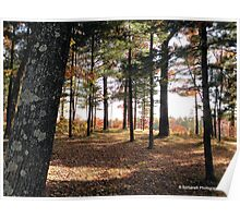 Autumn Forest in Wisconsin 2 of 2 Poster