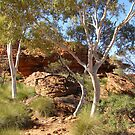Pretty Ghost Gums, Kings Canyon. N.T. Australia by Rita Blom