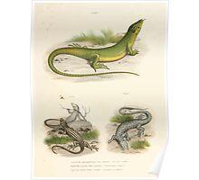 Leopold Joseph Fitzinger 1867 0065 Picture Atlas for popular scientific natural history of vertebrates Poster