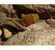 salamander hiding in the water Photographic Print