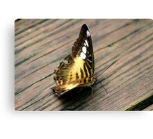 Butterfly Brownie Canvas Print