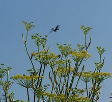Fennel Flowers and Wasps by NatureWaltzArts
