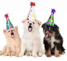 Puppy Dogs Singing Happy Birthday To You by Katrina Brown