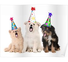 Puppy Dogs Singing Happy Birthday To You Poster