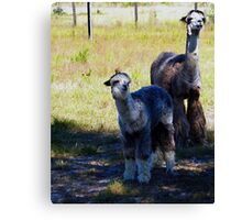 Boomer and Son Canvas Print