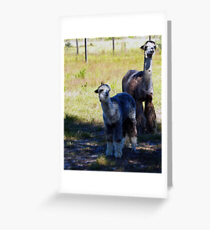 Boomer and Son Greeting Card