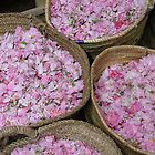 Petals - Marrakesh, Morocco by craigs79