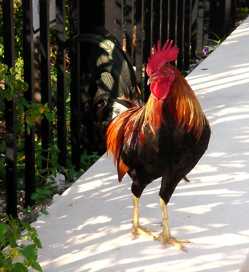 The Red Rooster in Key West, FL by Susanne Van Hulst