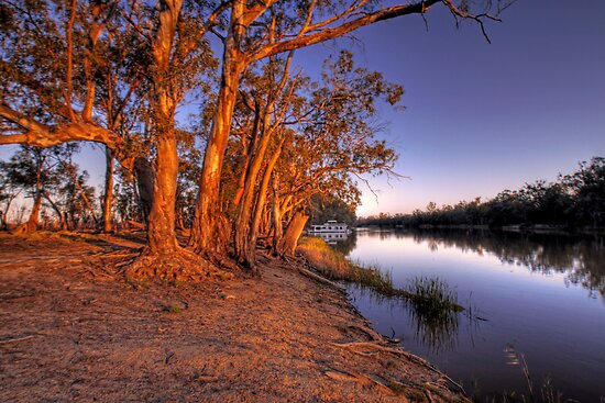 Eucalyptus Sunset - River Murray, Above Renmark, South Australia by Mark Richards