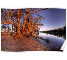 Eucalyptus Sunset - River Murray, Above Renmark, South Australia Poster