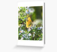 Orange Sulfur Butterfly Greeting Card