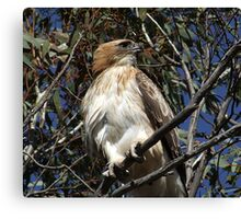 Little Eagle of Foxes Lair Canvas Print
