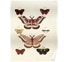 Exotic butterflies of the three parts of the world Pieter Cramer and Caspar Stoll 1782 Supplement 0215 Poster