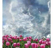 Resubmit of Clouds and Tulips Photographic Print