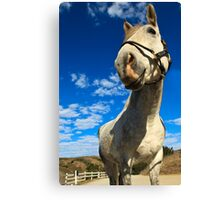 Silly Smile Canvas Print