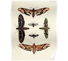 Exotic butterflies of the three parts of the world Pieter Cramer and Caspar Stoll 1782 V3 0121 Poster