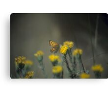 Butterfly And Rabbit Brush Canvas Print