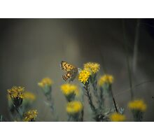 Butterfly And Rabbit Brush Photographic Print