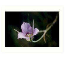 Sagebrush Mariposa Lily Art Print