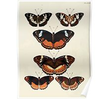 Exotic butterflies of the three parts of the world Pieter Cramer and Caspar Stoll 1782 V3 0242 Poster