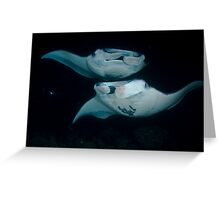 Manta Rays Greeting Card
