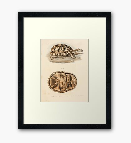 Leopold Joseph Fitzinger 1867 0167 Picture Atlas for popular scientific natural history of vertebrates Framed Print