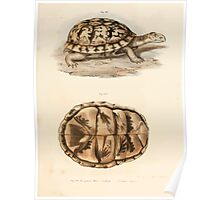 Leopold Joseph Fitzinger 1867 0167 Picture Atlas for popular scientific natural history of vertebrates Poster