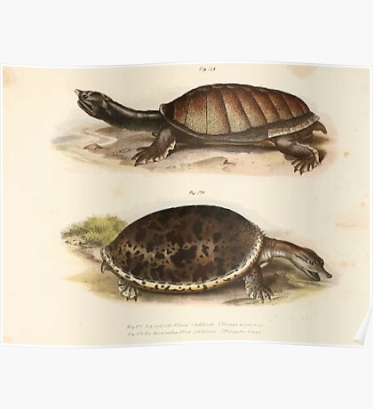 Leopold Joseph Fitzinger 1867 0179 Picture Atlas for popular scientific natural history of vertebrates Poster