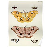 Exotic butterflies of the three parts of the world Pieter Cramer and Caspar Stoll 1782 V2 0190 Poster