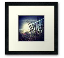 Tall Grass Letting Sunshine Poke Through Framed Print
