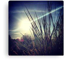 Tall Grass Letting Sunshine Poke Through Canvas Print
