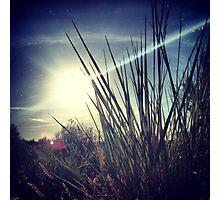 Tall Grass Letting Sunshine Poke Through Photographic Print