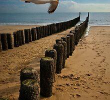 Flying Solo by George Parapadakis (monocotylidono)
