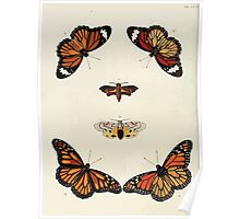 Exotic butterflies of the three parts of the world Pieter Cramer and Caspar Stoll 1782 V3 0058 Poster