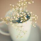 Softness by dhmig