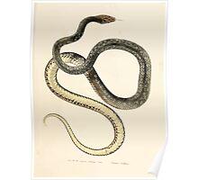 Leopold Joseph Fitzinger 1867 0121 Picture Atlas for popular scientific natural history of vertebrates Poster