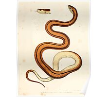 Leopold Joseph Fitzinger 1867 0137 Picture Atlas for popular scientific natural history of vertebrates Poster