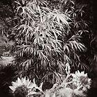 Bamboo by Steve Lovegrove