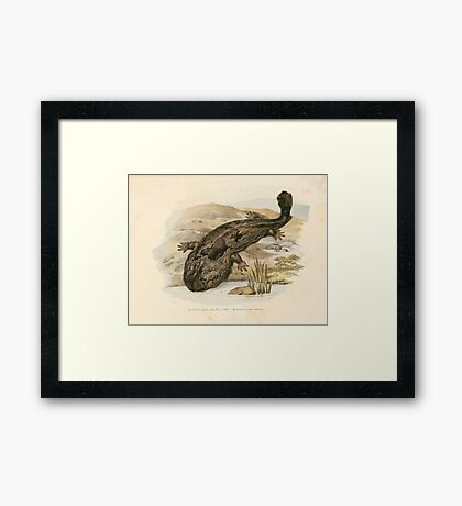 Leopold Joseph Fitzinger 1867 0219 Picture Atlas for popular scientific natural history of vertebrates Framed Print