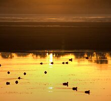 The Surface Became Golden... by GerryMac