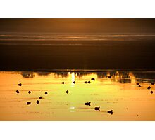 The Surface Became Golden... Photographic Print