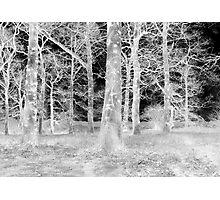 Spooky! Photographic Print