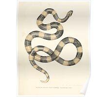 Leopold Joseph Fitzinger 1867 0145 Picture Atlas for popular scientific natural history of vertebrates Poster