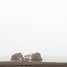 Foggy Yorkshire by Rameez Khawaja