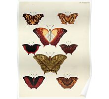 Exotic butterflies of the three parts of the world Pieter Cramer and Caspar Stoll 1782 V4 0409 Poster